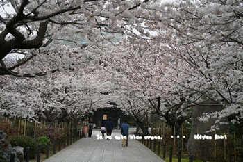 鎌倉の桜2018(33).jpg