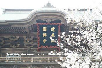 鎌倉の桜2018(37).jpg