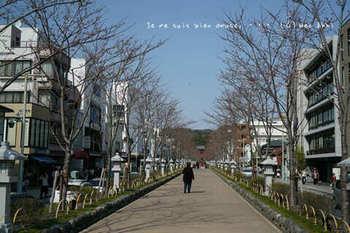 鎌倉の桜2019(20).jpg