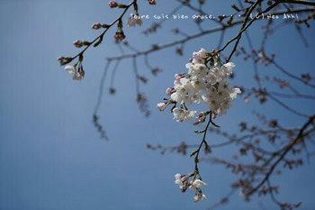 鎌倉の桜2019(21).jpg