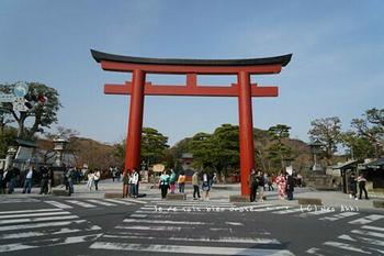 鎌倉の桜2019(25).jpg