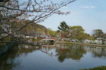 鎌倉の桜2019(26).jpg