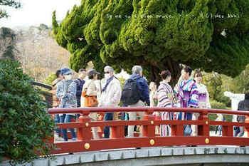 鎌倉の桜2019(29).jpg