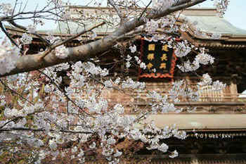 鎌倉の桜2019(45).jpg