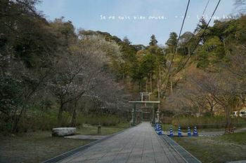 鎌倉の桜2019(54).jpg