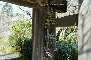 鎌倉の桜2019(6).jpg