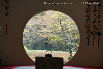 鎌倉の桜2019(7).jpg