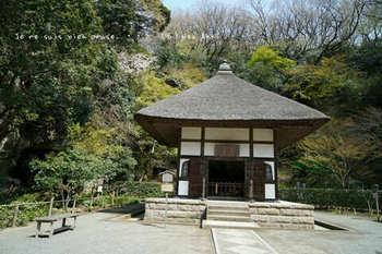 鎌倉の桜2019(9).jpg