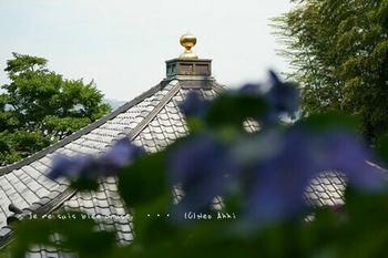 鎌倉紫陽花2019(13).jpg