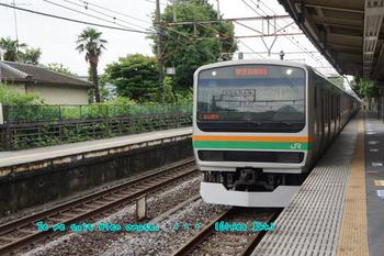 鎌倉紫陽花(43).jpg