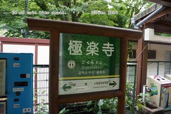 鎌倉紫陽花(45).jpg