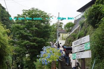 鎌倉紫陽花(46).jpg