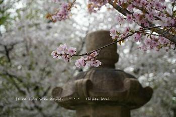 靖国神社の桜 2021(1).jpg