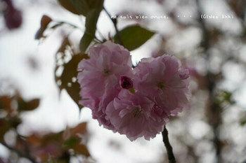 靖国神社の桜 2021(2).jpg