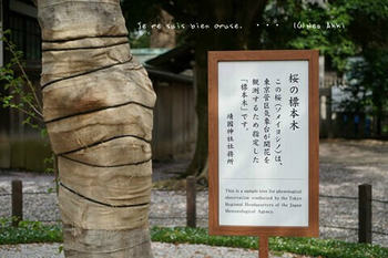 靖国神社の桜 2021(7).jpg