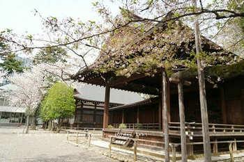 靖国神社の桜 2021(9).jpg